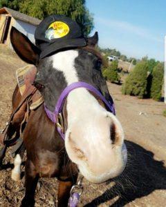 pony rides at Hagle Christmas Tree Farm