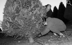 Acorn Write Up - Hagle Tree Farm