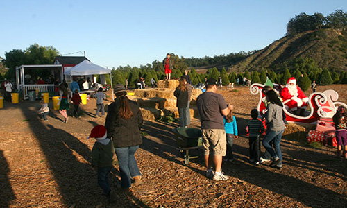 Hay Bale Hill at Hagle Tree Farm