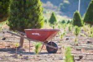 wheel barrels available at Hagle Christmas Tree Farm