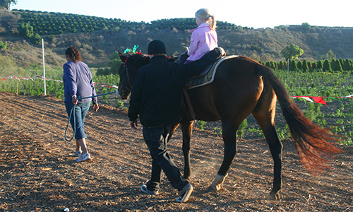Pony Rides at Hagle Tree Farm