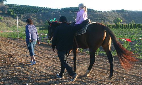 Pony Rides at Hagle Tree Farm