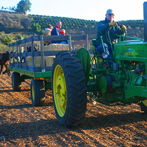 Activities at Hagle Christmas Tree Farm