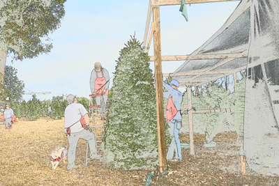 Hagle Christmas Tree Farm is closed for the remainder of 2018 holiday season